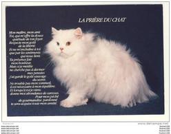 Carte De Chats ( Chat ) ( Recto Verso ) Prière Du Chat - Gatti