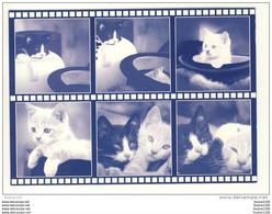 Carte De Chats ( Chat ) ( Recto Verso ) Collection Par Minou ( Mi Nou ) - Gatti
