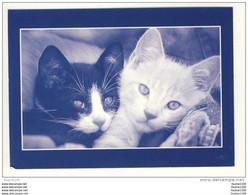 Carte De Chats ( Chat ) ( Recto Verso )  Collection Minou ( Mi Nou ) - Gatti