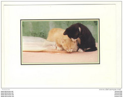 Carte De Chat ( Chats ) ( Recto Verso ) Les Chats Romantiques - Gatti