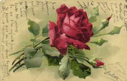 C Klein Roses Pionnière RV - Pintura & Cuadros