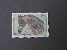 Rumänien 2010   6440 Pferde - Usado