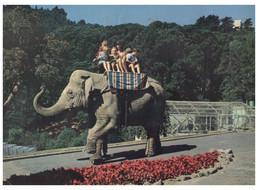 (OO 2) Wellington Zoo - Kamala Elephant Ride - Elefanti