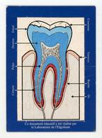 PUZZLE EDUCATIF SUR LA PROTECTION DENTAIRE PAR LE LABO ELGYDIUM - Medizinische Und Zahnmedizinische Geräte