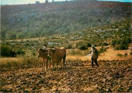 AGRICULTURE ATTELAGE - Spannen