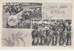 COLLOBIANO-VERCELLI-SALUTI DALLA RISAIA-CARTOLINA  VIAGGIATA IL 16-6-1956 - Vercelli