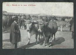 Aveyron,Cantal, Lozère; Boeufs De La Race D'Aubrac - Sin Clasificación