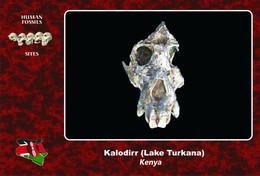 Set 3 Cartes Postales, Prehistoire, Human Fossil Sites, Kalodirr (Turkana Lake)(Kenya), Afropithecus Turkanensis - History