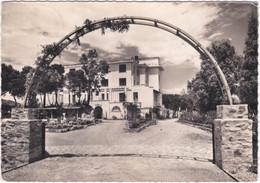 66. Gf. BANYULS-SUR-MER. L'Hôtel Miramar. 2 - Banyuls Sur Mer