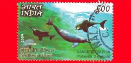 INDIA - Usato - 2009 -  Pesci - Delfini - Gangetic Dolphin (platanista Gangetica) - 5.00 - Used Stamps