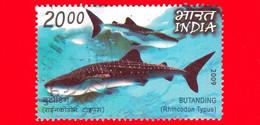 INDIA - Usato - 2009 -  Pesci - Squali - Butanding (Rhincodon Typus) - 20.00 - Used Stamps