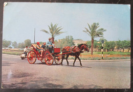 ISRAEL NATHANYA NETANYA HORSE PETIT PARIS PICTURE CARTE POSTALE KARTE POSTCARD ANSICHTKARTE CACHET PHOTO POST CARD PC - Israele