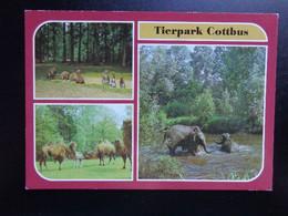 Zoo, Dierenpark, Tierpark / Tierpark Cottbus (kangoeroe, Kameel, Olifanten) --> Unwritten - Otros