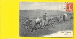 Moët & Chandon Le Bêchage Des Vignes Avant Plantation (Choque) Marne (51) - Non Classificati