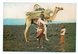 GF Djibouti 063, TFAI, Bourlon 1000-17, Chamelier, Timbre - Gibuti