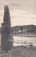 3686) DARMSTADT - Am OBERWALDHAUS  - Suepr Variante - Alter Baum U. Fluss 01.06.1906 !! - Darmstadt