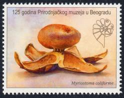 Earthstar Mushroom Myriostoma Coliforme 125th Ann. Natural History Museum Belgrade LABEL CINDERELLA VIGNETTE 2020 Serbia - Mushrooms