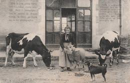 CPA (63) En Auvergne La Vie Simple Paysanne Brebis Ovin Vache Bovin Type (2 Scans) - Non Classificati