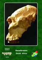 Set 4 Cartes Postales, Prehistoire, Human Fossil Sites, Swarkraans (South Africa), Paranthropus Robustus - History