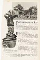 Oranges Pour La Soif /  Article,  Pris D`un Magazine / 1910/1911 - Unclassified