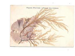 12145 - CPA Algues Marines- Fleurs Des Grêves, - Sin Clasificación