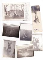Lot De 3 Photos Cartes Et 9 Photos De Chiens ( Certainement à HERSTAL / Liège ) 1922 Et 1923  (B247) - Dogs