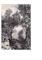 """Capri (Napoli): """"fra Gli Ulivi"""". Cart. Fp Inizio '900 - Napoli (Napels)"""