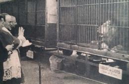 BLOIS Cirque AMAR  L' évêque De Blois Devant Les Lions  1946 - Non Classificati