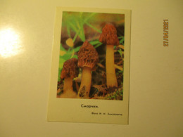 1978 Pocket Calendar MUSHROOM   ,  O - Small : 1971-80