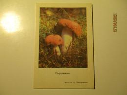 1978 Pocket Calendar MUSHROOM RUSSULA  ,  O - Small : 1971-80
