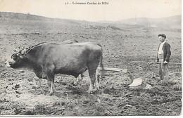 Saint Laurent De Cerdans  Laboureur Catalan Du Bilbé - Unclassified