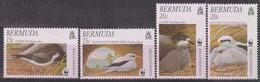 BERMUDES - N°810/3 ** (2001) Oiseaux - Bermuda