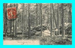 A896 / 113 77 - Foret De FONTAINEBLEAU Dans Les Grands Pins - Fontainebleau
