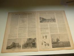 """Origineel Knipsel ( 3935 ) Uit Tijdschrift """" Ons Volk """"  1920 :  Aalstersche Hoppeteelt ( Hoppe  Houblon )  Aalst  Alost - Ohne Zuordnung"""