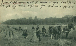 HARVESTING AT MIDDLEMUIR LENZIE  HORSE CHEVAL PAARD PFERD CABALLO  Part Of The Donkeycollection - Altri