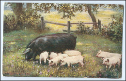 "N8066/ ""The Simple Life"" Tuck`s AK  Schweine Ferkel Ca.1910  - Unclassified"