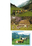 Lot 23 Cartes Vaches - Vacas
