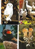 16 Cartes Oiseaux - Pájaros