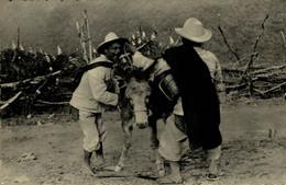 VENEZUELA COSTUMES CAMPESINOS ANDINOS & BURRO DONKEY ANDES  ANE DONKEY EZEL ESEL MULES Donkeycollection - Esel