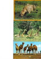 Lot 31 Cartes Animaux - 5 - 99 Postcards