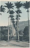 RIO DE JANEIRO - JARDIM BOTANICO ALAMEDA DAS PALMEIRAS (C P DE CARNET) - Rio De Janeiro