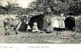 A GIPSY CAMP NEW FOREST GITANOS GITAN  ZIGEUNER  ANE DONKEY EZEL ESEL MULES Donkeycollection - Sonstige