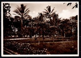 Somalia Italiana - Palmizi (Fotocelere Di A. Campassi - Torino - 1935) - Somalie