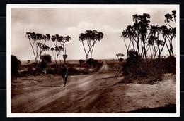 Somalia Italiana - Camionabile Giumba-Margherita (Fotocelere Di A. Campassi - Torino - 1935) - Somalie