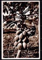 Somalia Italiana - Papaia  (Fotocelere Di A. Campassi - Torino - 1935) - Somalie