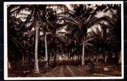Somalia Italiana - Piantagione Di Cocco (Fotocelere Di A. Campassi - Torino - 1935) - Somalie