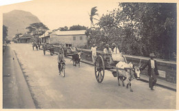 Mauritius - Ox Carts - Charrettes à Bœufs - REAL PHOTO - Publ. Unknown. - Mauritius