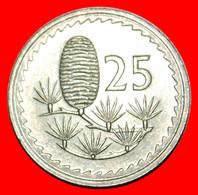 • CEDAR Of LEBANON: CYPRUS ★ 25 MILS 1981!  LOW START ★ NO RESERVE! - Cyprus