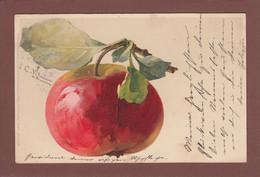 Catharina KLEIN - Signé - Fruit - Pomme - Klein, Catharina