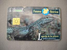 7024 Télécarte Collection LEZARD DES PITIUSAS   Espagne ( Recto Verso)  Carte Téléphonique - Altri